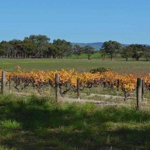 vineyard-view-sm